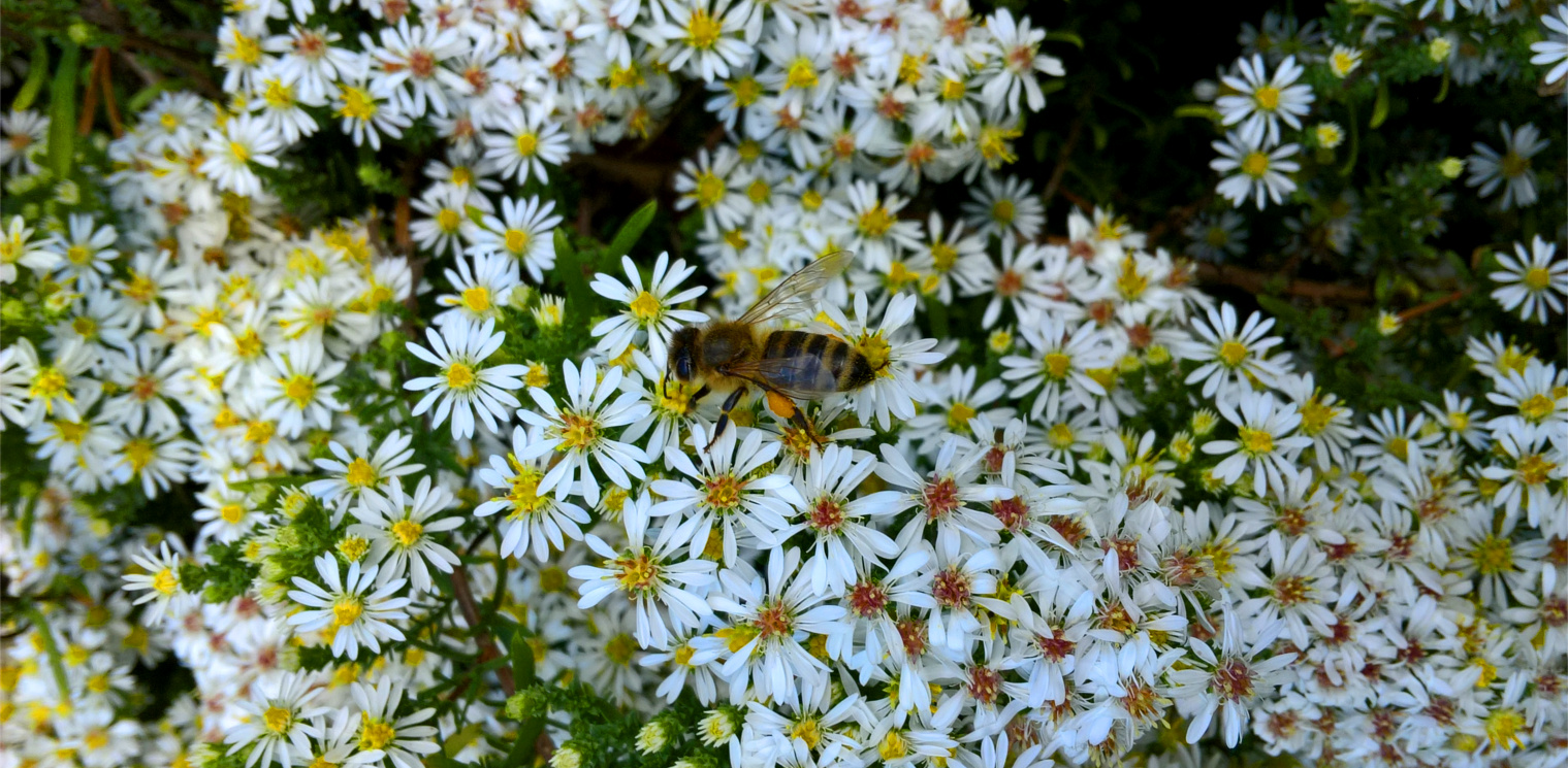 Harzer-Honig